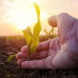 Usaha Memupuk Tanah Surga