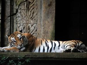 Binatang TSI Dicekoki Miras: JAAN Ambil Langkah Hukum