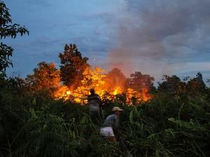 Kebakaran 50 Hektare Lahan Gambut Terjadi di Aceh