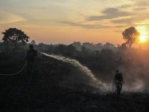BRG: 1,2 Juta Hektar Lebih Lahan Gambut Sudah Direstorasi pada 2017
