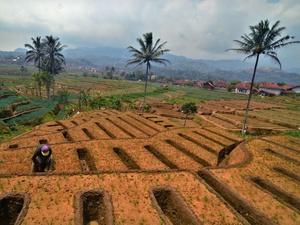Mentan Ingin Indonesia Terus Mengekspor Bawang Merah