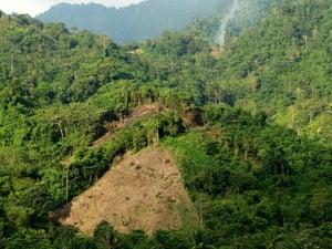 Jokowi: Bujet Kementerian Kehutanan Gede, Tapi Tak Ada Hutan Jadi
