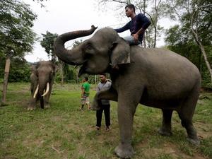 100 Hektare Lahan Rusak Akibat Konflik Gajah vs Manusia di Lampung