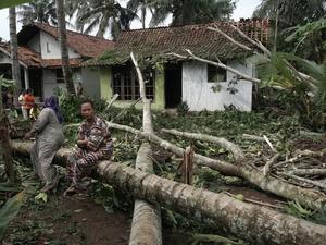 Hujan Lebat Sebabkan Puluhan Pohon Tumbang di Yogyakarta