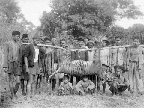 Maung dan Prabu Siliwangi: Mitos atau Fakta? - Tirto ID