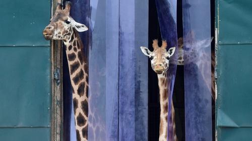 √ 100+ Mewarnai Gambar Kebun Binatang Untuk Anak Tk