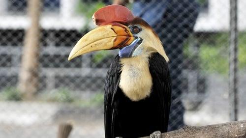 Kebun Binatang Merupakan Usaha Pemeliharaan Hewan Secara