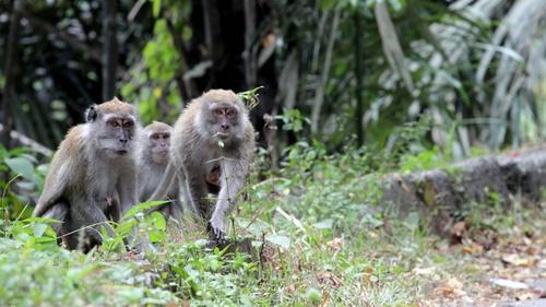 86 Gambar Virus Cacar Monyet Terbaik
