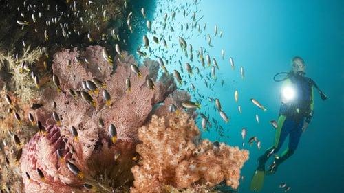 86 Gambar Alam Bawah Laut