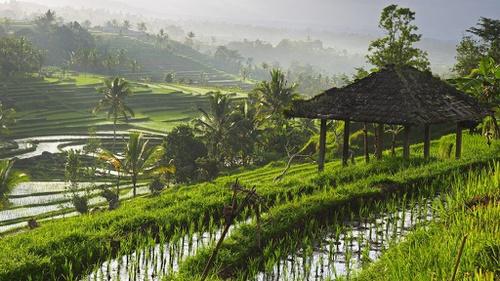 Daftar Wisata Alam Di Ubud Monkey Forest Hingga Bali Taman