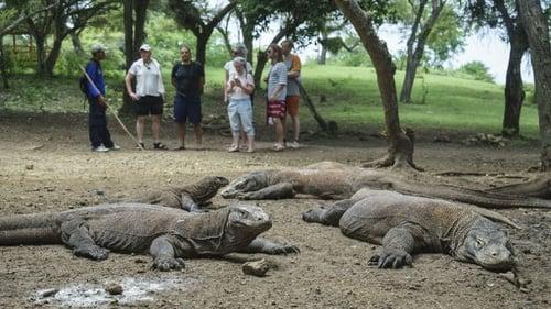 Taman Nasional Komodo Ditutup Sementara