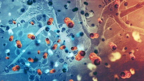 hpv affecting skin professional cancer navigators