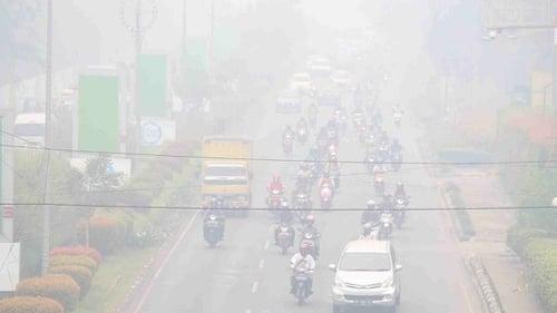 Penyebab Dan Akibat Kebakaran Hutan Di Kalimantan Hingga Sumatera Tirto Id
