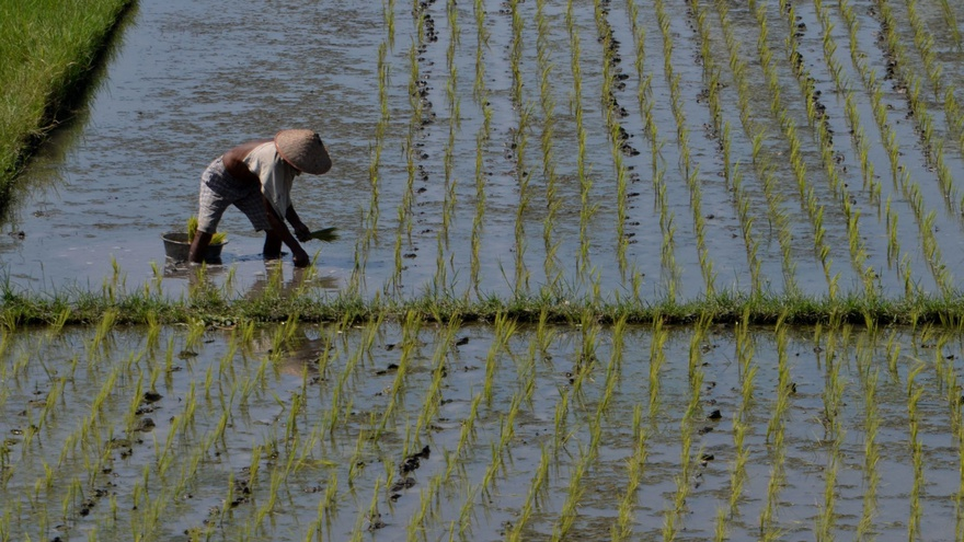 Pemerintah Harusnya Memprioritaskan Kesejahteraan Petani