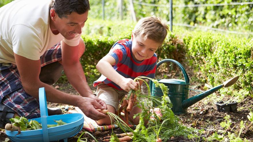 ilustrasi berkebun  istockphoto - Cara Membuat Kebun Sayuran dirumah mudah dan simple