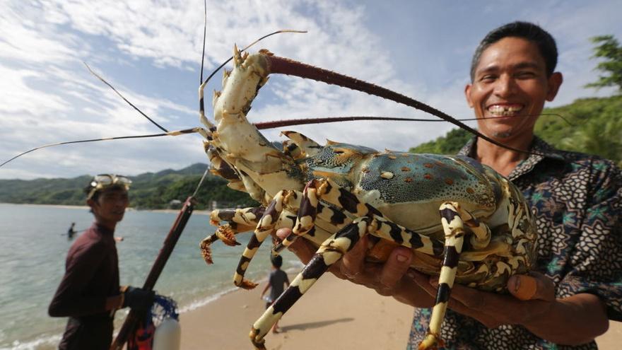 Apa Perbedaan Lobster Air Tawar Dan Lobster Air Laut Tirto Id