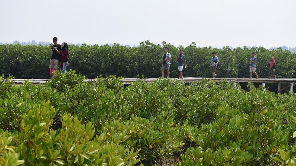 mangrove pulau kelapa dua