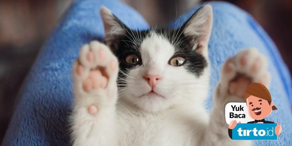 basmi kutu pada kucing peliharaan
